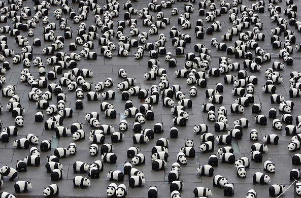 1600_pandas.jpg
