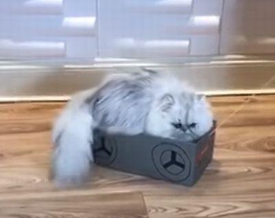 cat_in_the_box.jpg