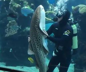 A_Zebra_Shark.jpg