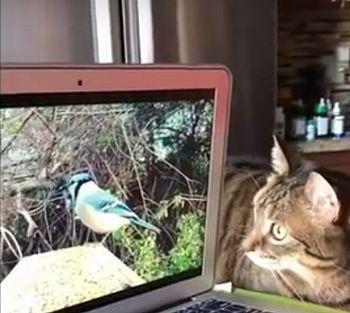 Bird-watching_cat.jpg