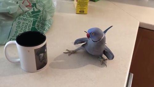 Bird_In_Love.jpg