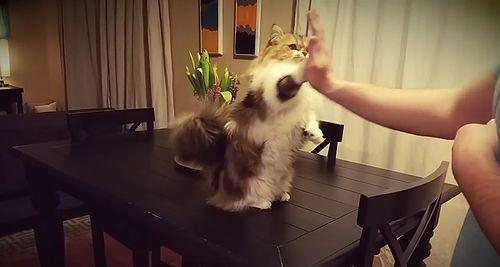 CAT_GIVES_HIGH_FIVES.jpg