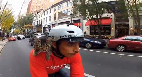 Cat_Bike_Guy.jpg
