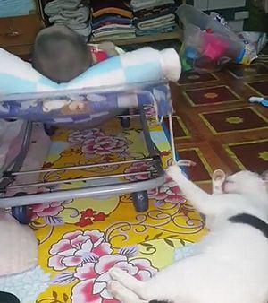 Cat_Has_Multitasking_Perfected.jpg