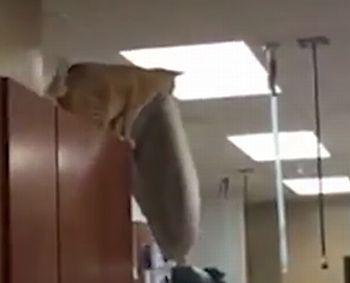 Cat_leaps_off_cabinet.jpg
