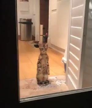Cat_pulls_off_flawless.jpg