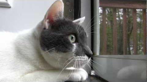 Chattering_Cat.jpg