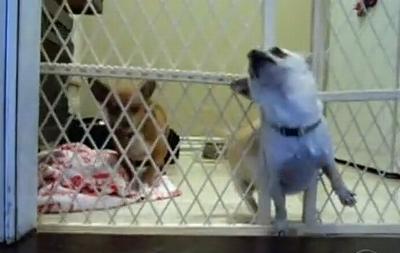 Chihuahua_Escape.jpg
