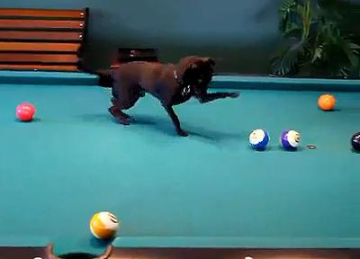 Chihuahua_pool.jpg