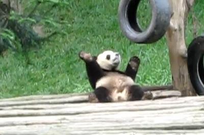 Dancing_panda.jpg