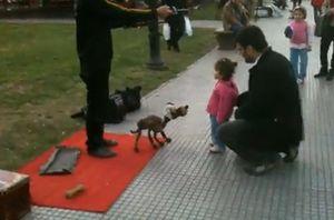 Dog_Puppeteer.jpg