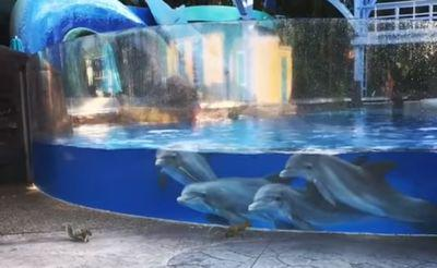 Dolphins_watching_squirrels.jpg
