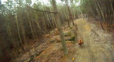 Downhill_Dog.jpg