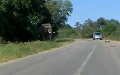 Elephant_Fail.jpg