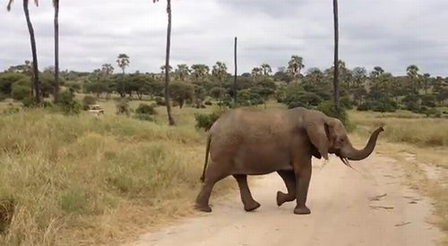 Elephant_Love.jpg