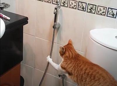 Funny_Cat_Begs.jpg