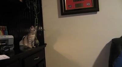 Kitten_Jump_Fail.jpg
