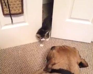 Kitten_scares_big_dog.jpg