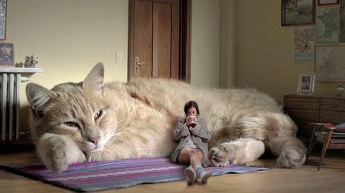 Le_gato.jpg