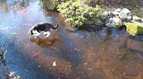 Nadia_chasing_goldfish.jpg
