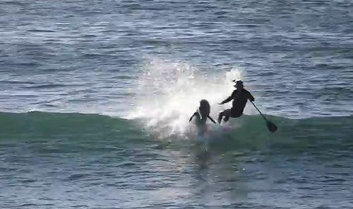 Paddle_Boarder_Gets_SMASHED_by_Dolphin.jpg