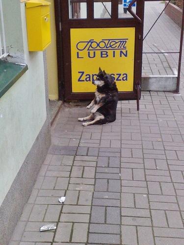 Patience_dog.jpg