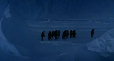 Penguin_falls_down.jpg