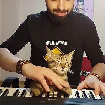Pianist_cat.jpg