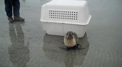 Seal_Release.jpg