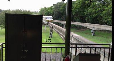 Squirre_halts_Train.jpg
