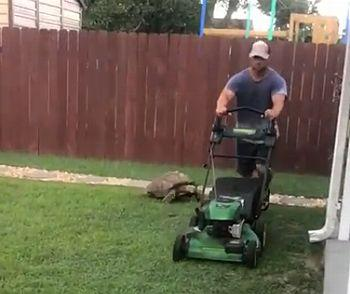 Tortoise_Chases_Lawnmower.jpg