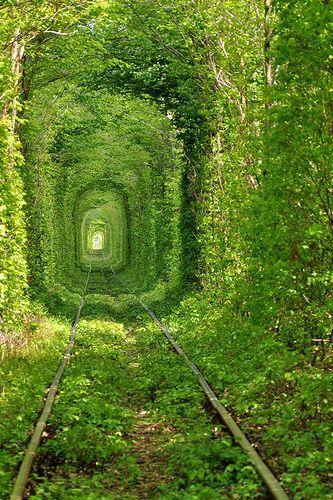 Tree_Tunnel_02.jpg