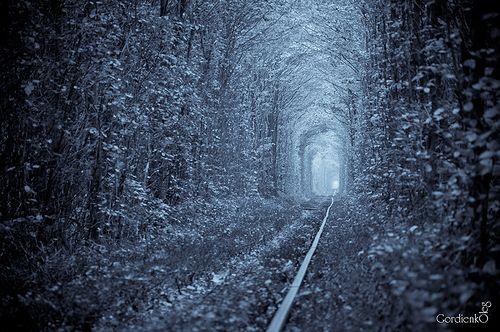 Tree_Tunnel_03.jpg