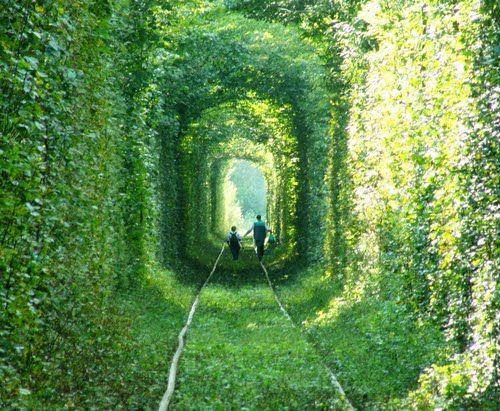Tree_Tunnel_04.jpg