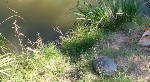 Turtle_jump.jpg