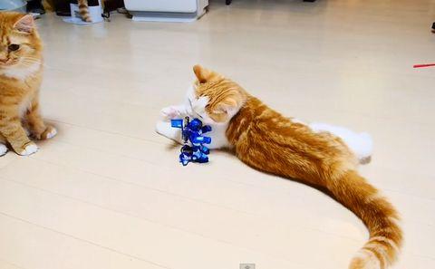a_funny_robot_VS_a_cat.jpg