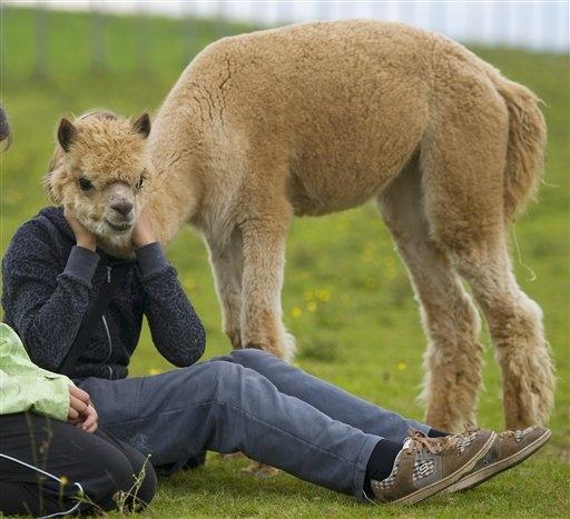 alpaca_man.jpg