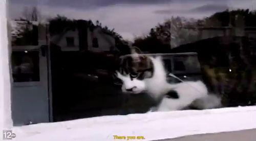 cat_battling_the_USPS.jpg