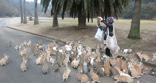 rabbits_island.jpg