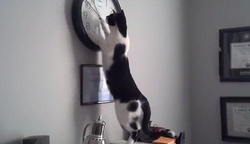 Cat_O_Clock.jpg