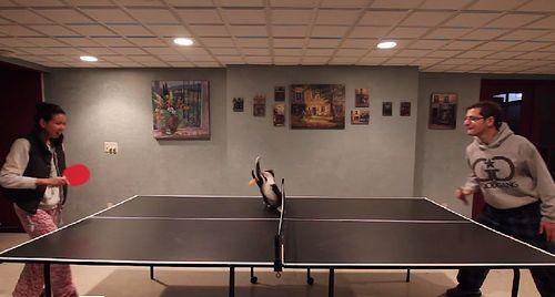ping_pong_cat.jpg