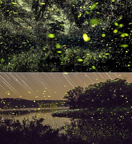 firefly_timelapse.jpg