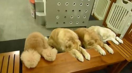 four_dogs.jpg