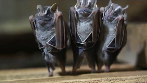 upside_down_bats.jpg
