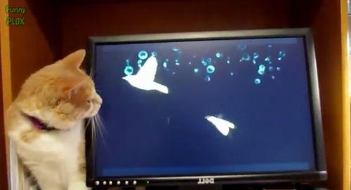 Curious_Cats.jpg
