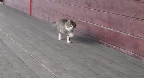 cat_walk.jpg