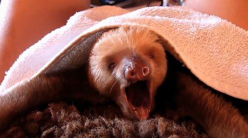 sleely_sloths.jpg