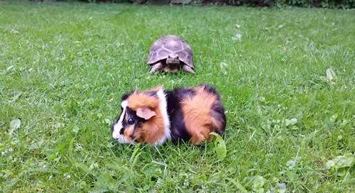 Attack_Tortoise.jpg