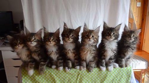 Kittens_born_April_10.jpg