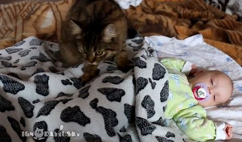 Cat_lulling_a_baby.jpg